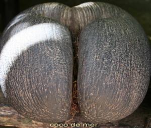 Huge Nut Sack